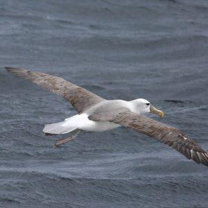 Albatross WASR eCard Front